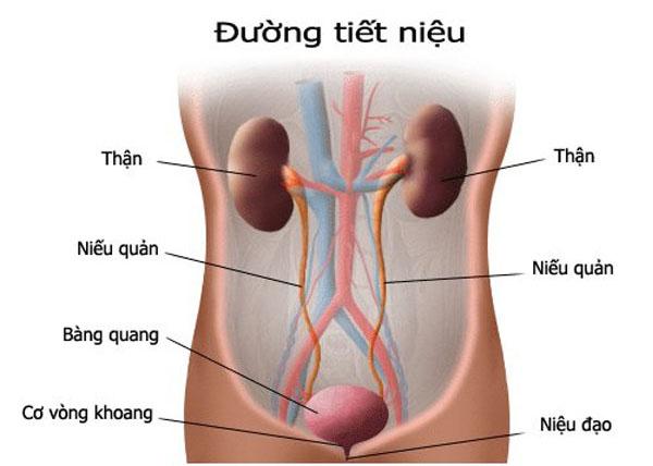 nhiễm khuẩn tiết niệu khi mang thai 1