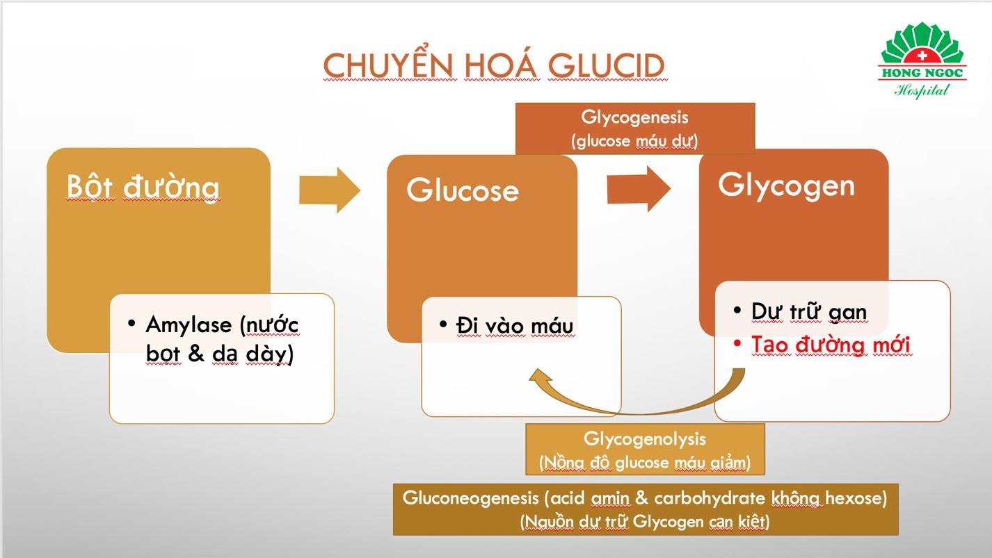 Tổng hợp 4 chức năng sinh lý của gan